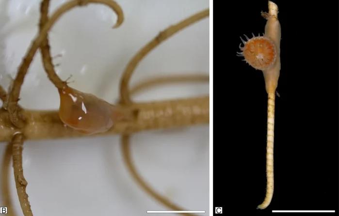 Queste due creature, considerate estinte da 273 milioni di anni, sono state ritrovate